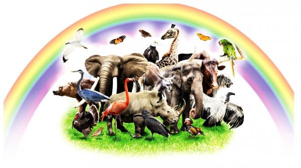 Xxl Postkarte Tiere Unter Regenbogen