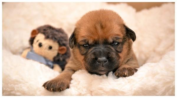 Kleiner Süßer Hund
