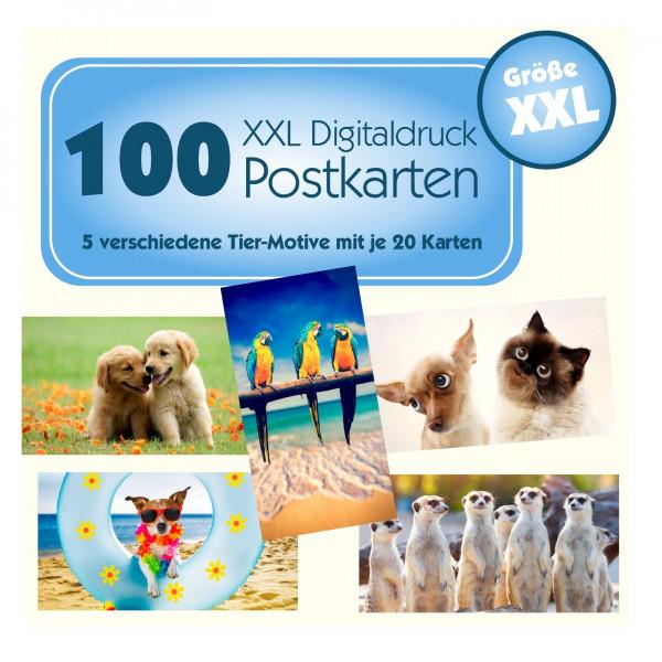 Xxl Postkartenpaket Motiv Tiere Gewinnspiele
