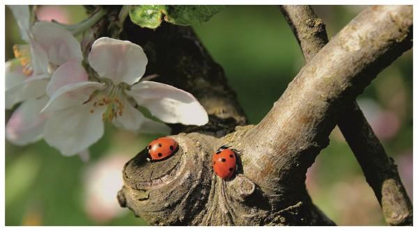 Marienkäfer Glück Blume