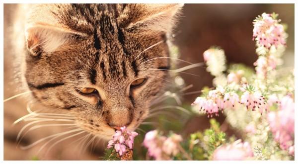 Katze Blume